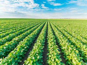 España es el principal exportador de fruta y verdura de la Unión Europea