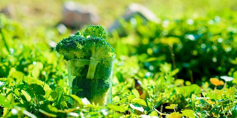 El contenido de vitaminas en verduras congeladas, es comparable y ocasionalmente superior al de las frescas