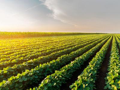 El mercado español de verduras congeladas sigue al alza, crece un 13% la producción y aumentan las exportaciones